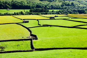 Barn and dry stone walls in meadows at Gunnerside, Swaledale, Yorkshire Dales, Yorkshireの写真素材 [FYI03782907]