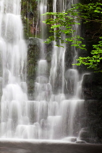 Scale Haw Force near Hebden in Wharfedale, Yorkshire Dales, Yorkshireの写真素材 [FYI03782964]