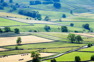 Meadows in Wharfedale from Edge Top near Hebden, Yorkshire Dales, Yorkshireの写真素材 [FYI03782965]