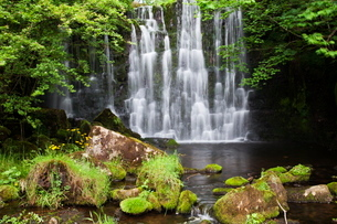 Scale Haw Force near Hebden in Wharfedale, Yorkshire Dales, Yorkshireの写真素材 [FYI03782966]