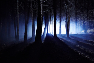 Eerie woods and the English countryside at night, light streaming through treesの写真素材 [FYI03783136]