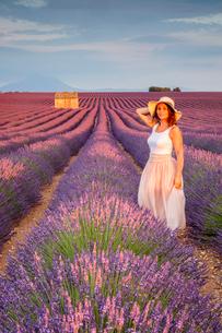 Woman with hat in lavender fields, Plateau de Valensole, Alpes-de-Haute-Provence, Provence-Alpes-Cotの写真素材 [FYI03783238]