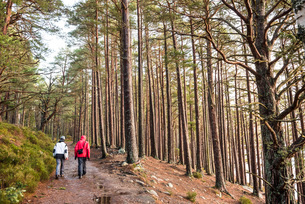 Hiking in Rothiemurchus Forest at Loch an Eilein, Aviemore, Cairngorms National Park, Scotland, Unitの写真素材 [FYI03783258]