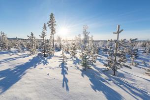 Sunburst on frozen trees covered with snow, Kiruna, Norrbotten County, Lapland, Sweden, Scandinavia,の写真素材 [FYI03783358]