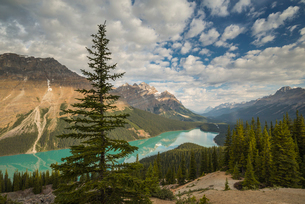 Wide view of Peyto Lake, Banff National Park, UNESCO World Heritage Site, Alberta, Rocky Mountains,の写真素材 [FYI03783591]