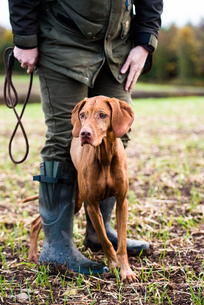 Gun dog and its owner on a game shoot, Norfolk, England, United Kingdom, Europeの写真素材 [FYI03783668]