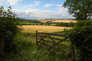 Five bar gate opening on to barley fields, Guiting Power, Cotswolds, Gloucestershire, England, Uniteの写真素材 [FYI03783772]