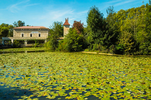 Lily pads on Le Dropt River at this popular south western historic bastide town, Eymet, Bergerac, Doの写真素材 [FYI03783819]