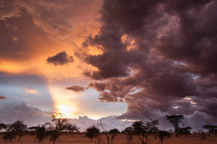 Clouds approach the savannah at the beginning of the rainy season, Tsavo, Kenya, East Africa, Africaの写真素材 [FYI03783821]