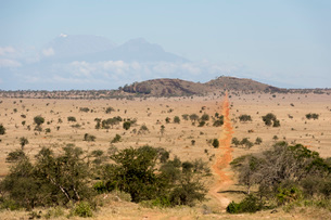A view of the Lion Rock in Lualenyi Game Reserve, Tsavo, Kenya, East Africa, Africaの写真素材 [FYI03783831]