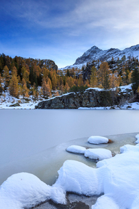 Frozen Lake Mufule framed by larches and snow in autumn, Malenco Valley, Province of Sondrio, Valtelの写真素材 [FYI03784035]