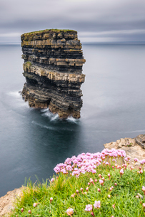 Downpatrick Head with flowers in the foreground, Ballycastle, County Mayo, Connacht province, Republの写真素材 [FYI03784100]
