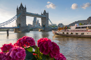 Tower Bridge and City of London skyline from Butler's Wharf, London, England, United Kingdom, Europeの写真素材 [FYI03784225]
