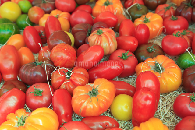 Tomatoes in the market, Cours Saleya, Old Town, Nice, Alpes Maritimes, Provence, Cote d'Azur, Frenchの写真素材 [FYI03784386]