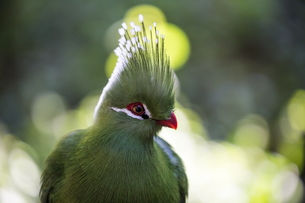 A forest bird at Birds of Eden in Plettenberg Bay, South Africa, Africaの写真素材 [FYI03784555]