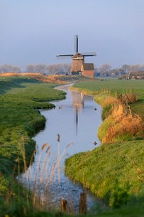 Typical windmill reflected in the canal at dawn, Berkmeer, municipality of Koggenland, North Hollandの写真素材 [FYI03784587]