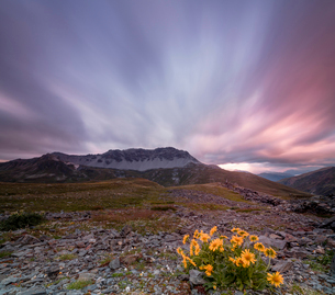 Panorama of pink clouds at dawn on Piz Umbrail framed by flowers, Braulio Valley, Valtellina, Lombarの写真素材 [FYI03784683]