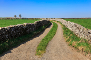 Track disappears into distance, between dry stone walls, a typical country scene, Peak District, Derの写真素材 [FYI03784742]