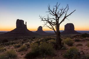 Tree and bushes before sunrise. Monument Valley, Navajo Tribal Park, Arizona, United States of Ameriの写真素材 [FYI03784838]
