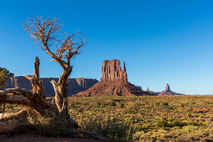Rock formations and tree, Monument Valley, Navajo Tribal Park, Arizona, United States of America, Noの写真素材 [FYI03784867]