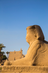 Avenue of Sphinxes, Luxor Temple, UNESCO World Heritage Site, Luxor, Egypt, North Africa, Africaの写真素材 [FYI03785155]
