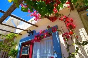 Restaurant exterior with bougainvillea, Kritsa, Crete, Greek Islands, Greece, Europeの写真素材 [FYI03785257]