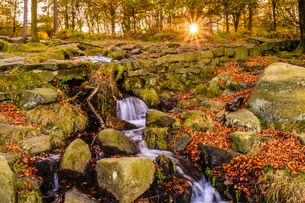 Burbage Brook, autumn sunrise, golden leaves and waterfall, Padley Gorge, Peak District National Parの写真素材 [FYI03785359]
