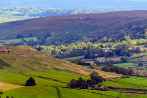 Heathland in bloom, and rolling hills, Yorkshire Moors National Park, Yorkshire, England, United Kinの写真素材 [FYI03785390]