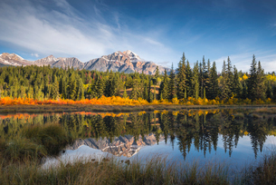 Pyramid Mountain reflected in a lake with autumn colour, Jasper National Park, UNESCO World Heritageの写真素材 [FYI03785598]