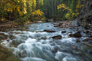 River flowing through Maligne Canyon with autumn foliage, Jasper National Park, UNESCO World Heritagの写真素材 [FYI03785601]