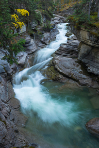 River flowing through Maligne Canyon with autumn foliage, Jasper National Park, UNESCO World Heritagの写真素材 [FYI03785602]