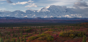 Lone hiker walks into the tundra leading to Mount Denali (Mount McKinley), Alaska, United States ofの写真素材 [FYI03785745]