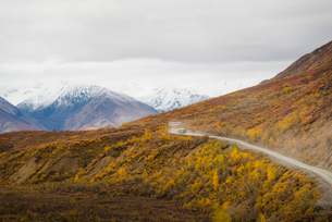 Camper buses driving into the heart of Denali National Park, Alaska, United States of America, Northの写真素材 [FYI03785748]