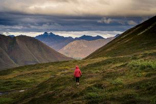 Lone hiker walks into Alaskan wilderness, Alaska, United States of America, North Americaの写真素材 [FYI03785749]