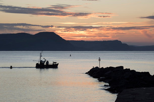 Fishing boat sailing past The Cobb at sunrise with Golden Cap and Jurassic Coast, UNESCO World Heritの写真素材 [FYI03786066]