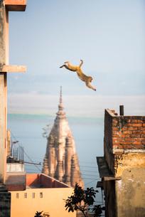 Monkey, Varanasi, Uttar Pradesh, India, Asiaの写真素材 [FYI03786128]