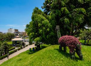 Green Llama in Parque de la Amistad (Friendship Park), Santiago de Surco District, Lima, Peru, Southの写真素材 [FYI03786610]