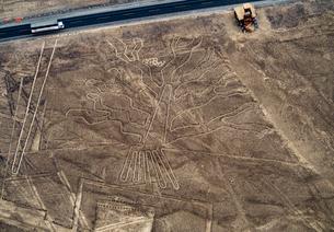 The Tree Geoglyph, aerial view, Nazca, UNESCO World Heritage Site, Ica Region, Peru, South Americaの写真素材 [FYI03786645]