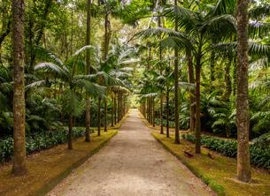 Terra Nostra Park, Furnas, Sao Miguel Island, Azores, Portugal, Atlantic, Europeの写真素材 [FYI03786721]