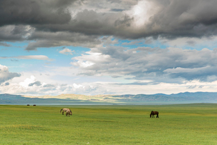 Horses grazing on the Mongolian steppe under a cloudy sky, South Hangay, Mongolia, Central Asia, Asiの写真素材 [FYI03786787]