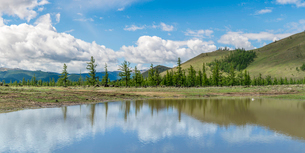 Water pond and fir trees in White Lake National Park, Tariat district, North Hangay province, Mongolの写真素材 [FYI03786811]