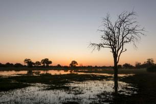 Sunset over the Delta, Khwai Conservation Area, Botswana, Africaの写真素材 [FYI03787023]