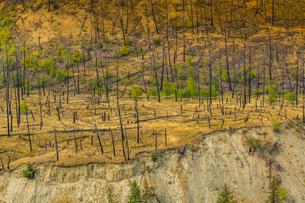 View of barren land following recent fire near Kamloops, British Columbia, Canada, North Americaの写真素材 [FYI03787266]