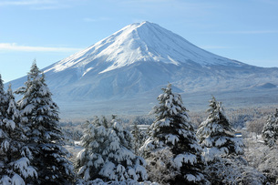 View of Mount Fuji, UNESCO World Heritage Site, in the early morning after a heavy fall of snow, Fujの写真素材 [FYI03787323]