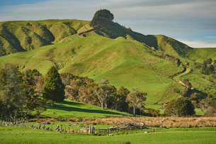 View from Highway 1 near Te Ohaki showing typical volcanic landscape, Waikato, North Island, New Zeaの写真素材 [FYI03787428]