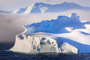 Penguins on a huge non-tabular iceberg, mountains, evening light and mist, Bransfield Strait, Southの写真素材 [FYI03787464]