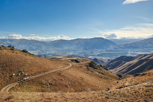 Sheep graze hillsides overlooking Cromwell with gold-mining excavations beyond, Otago, South Island,の写真素材 [FYI03787792]