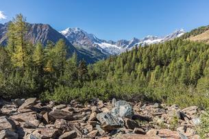 Monte Disgrazia seen from Valle di Chiareggio, Malenco Valley, province of Sondrio, Valtellina, Lombの写真素材 [FYI03787830]