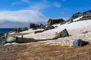 Handsome derelict wooden boat on Half Moon Island snowy shore, blue sky and sun, South Shetland Islaの写真素材 [FYI03788315]