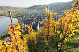 View from Calmont Hill to Bremm, Moselle Valley, Rhineland-Palatinate, Germany, Europeの写真素材 [FYI03788319]